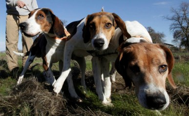 perros-caza comparativa-neandertal-homo-sapiens perros-caza grabado-hombre-perro