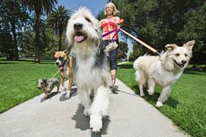 perros-correa-barcelona-CIMFormacion|hogares-con-perro-barcelona-CIMFormacion|jabali-barcelona-CIMFormacion|perro-metro-barcelona-CIMFormacion