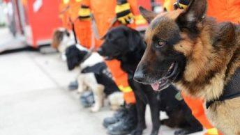 perros-de-rescate-unidad-k9|perros-k9-1|perros-k9-2|perros-k9-3