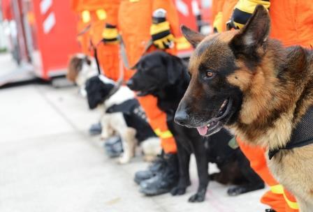 perros-de-rescate-unidad-k9 perros-k9-1 perros-k9-2 perros-k9-3