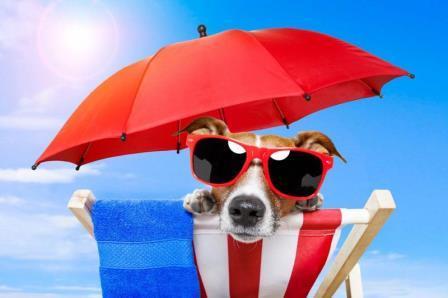 perros en verano|pug-carlino|san bernardo y boyero de berna