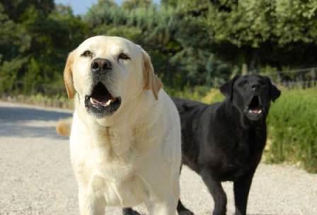 perros ladrando|perro y premio|premio para perro|perro ladrando
