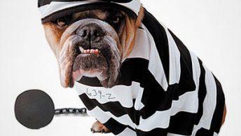 perros-potencialmente-peligrosos-CIM-Formacion