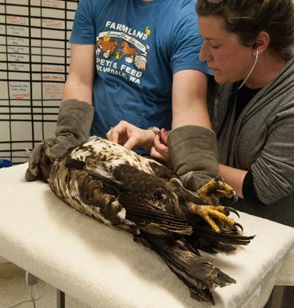 Recepción de aves salvajes previo a su rehabilitación 1