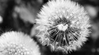 plantas-alergias-min