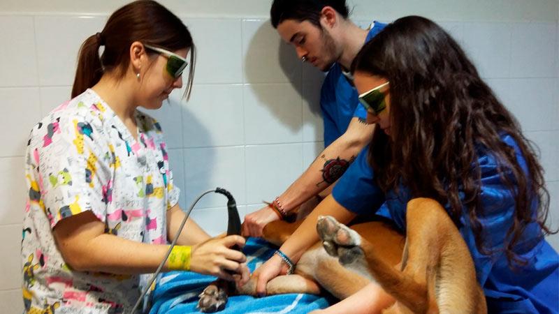 Alumnos de prácticas del curso de ayudante técnico veterinario