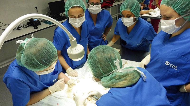 Prácticas del curso de auxiliar de veterinaria de CIM