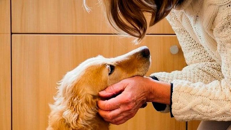 premiar-al-perro-caricia|premiar-al-perro-comida