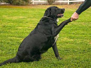 prueba para saber si mi perro es diestro o zurdo