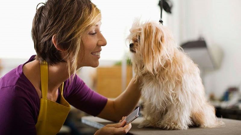 Peluquera canina cepillando a un perro