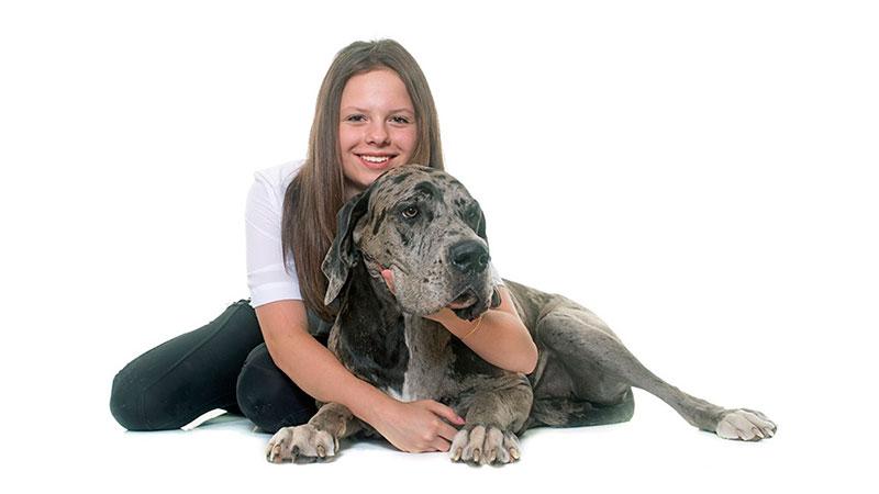razas-de-perro-gran-danes