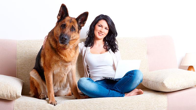 razas-de-perro-pastor-aleman