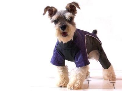 Abrigos para perros: ¿moda o necesidad? 1