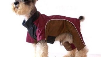 ropa para perros 4|ropa para perros 1|ropa para perros 2|ropa para perros 3