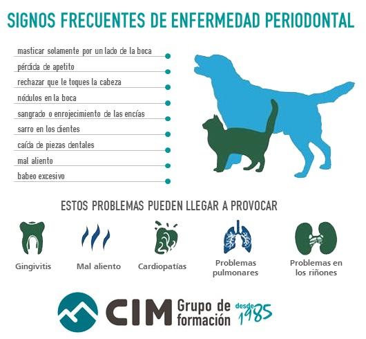 signos-frecuentes-enfermedad-periodontal-perros-gatos