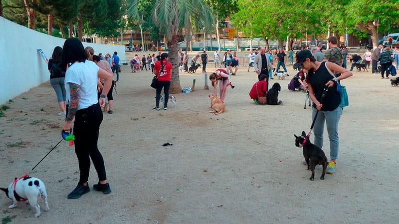 Taller de Educación canina urbana organizado por CIM Formación 1