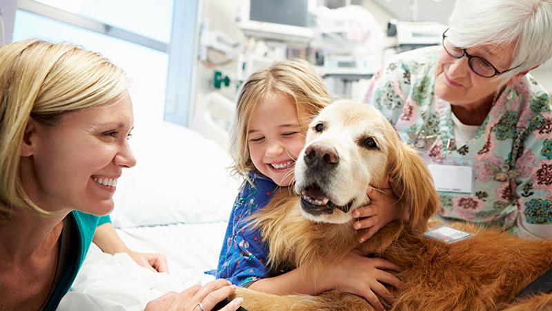Perro de terapia asistida con una niña en el hospital