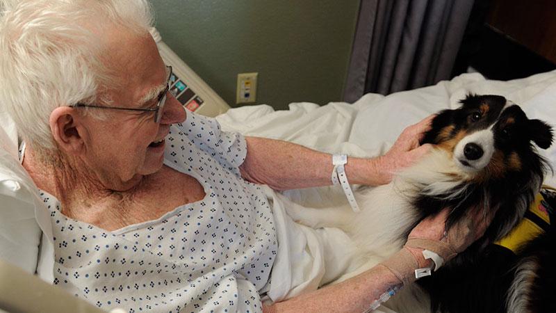 Perro de terapia asistida en un hospital