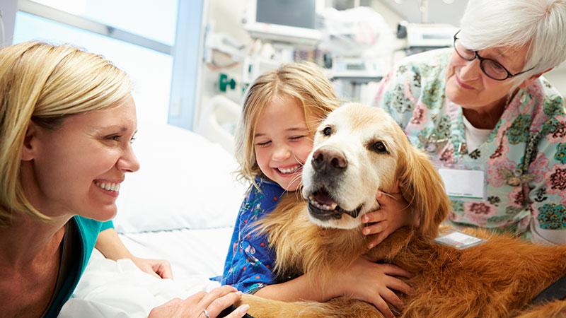 terapia-asistida-por-perros|terapia-con-perros|perro-de-terapia