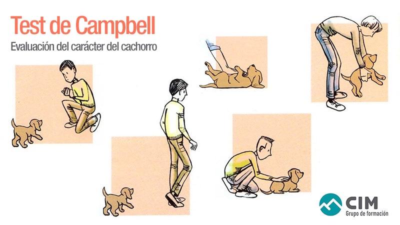 Test de Campbell para evaluar el carácter de los cachorros