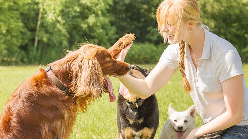 trabajar con perros