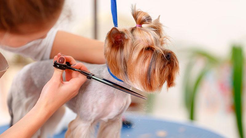 trabajar-peluqueria-canina