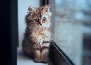 trastorno afectivo estacional en gatos