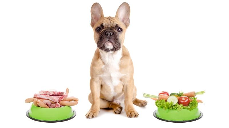 trastornos-de-conducta-en-perros-por-dieta trastornos-de-conducta-en-perros-por-la-dieta