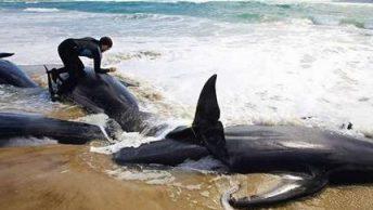 varamiento-cetaceos-ballenas-1|varamiento-cetaceos-ballenas-2|varamiento-cetaceos-ballenas-3