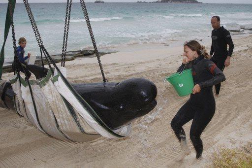 varamiento-cetaceos-ballenas-2