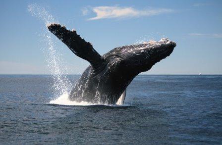 varamiento-cetaceos-ballenas-3