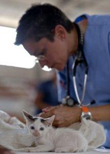 veterinaria-y-gato