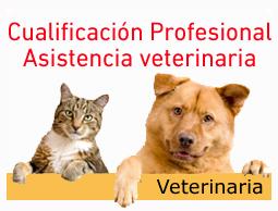 veterinaria_2|Miniatura-Incual-sep12_0|INCUAL-cualificacion-profesional-curso-auxiliar-veterinaria-oficial