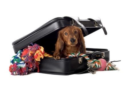 viajar-con-mascotas|transportin-de-perro|am_79226_5356341_853023