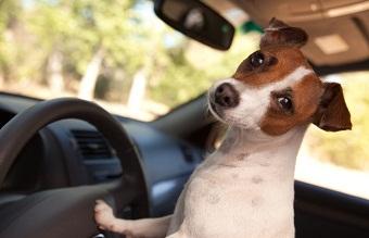 viajar-seguro-mascotas-CIMFormacion|rejilla-divisoria-perros-CIMFormacion|arnes-seguridad-perro-CIMFormacion