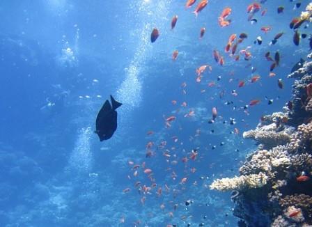 vida marina|acuario-vida-marina-protegida|acuario-vida-marina-protegida