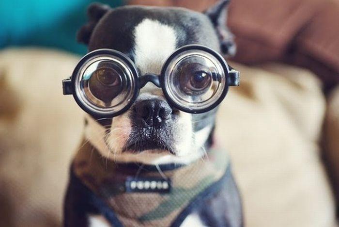vision-perro-CIMFormacion|vision-color-perrovshumano-CIMFormacion|vision-cromatica-perro-CIMFormacion|pista-agility-color