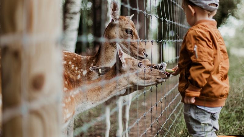 zoo-ciervo monos-zoo aguila-en-zoo-min