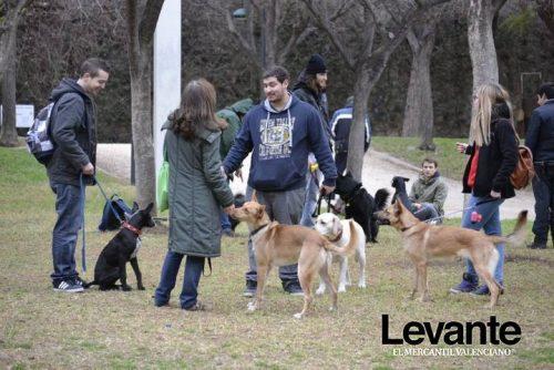 noticias cim general cim valencia educacion y adiestramiento veterinaria Lecciones de educación canina, por Modepran y CIM