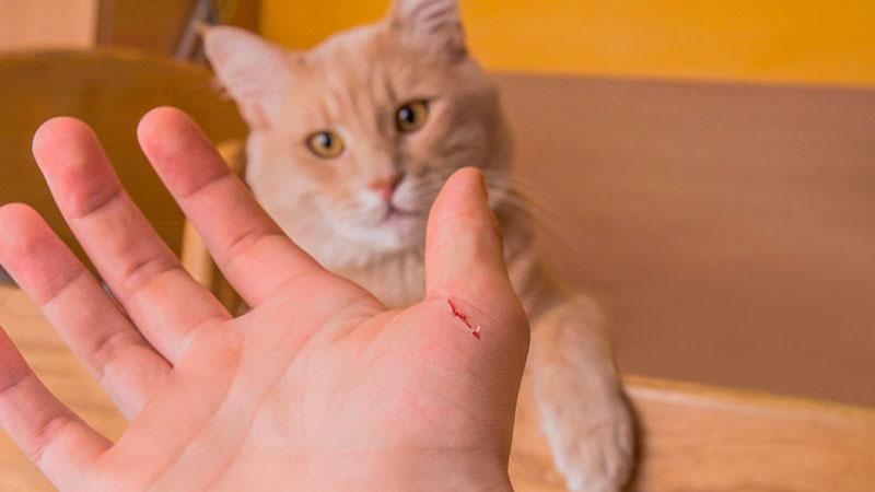 Enfermedades que pueden contagiar los animales de compañía