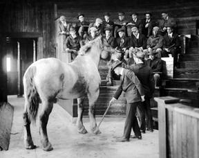 Imagen antigua de veterinario