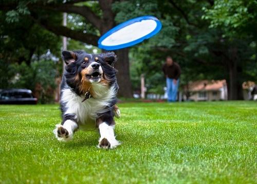 Deportes caninos: diferentes formas de disfrutar con tu perro 10