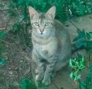 Princesa-gata-adopcion-asociacion-APAO-barcelona-2