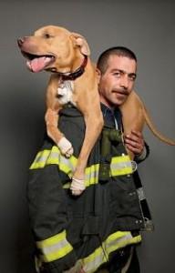 Wilma fue rescatada y adoptada por el capitán de bomberos Steve Sietos.Foto: Brad De Cecco