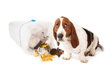 ¿Entiende mi perro una reprimenda? 10