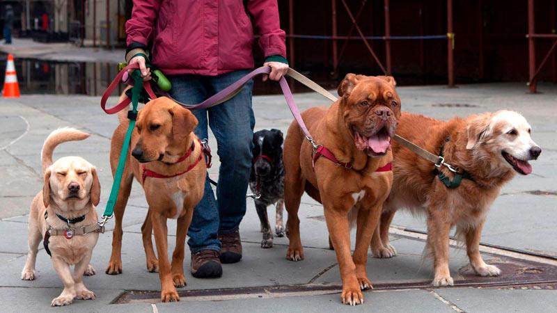 Perros paseados en Barcelona