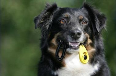 El clicker para el entrenamiento canino 7