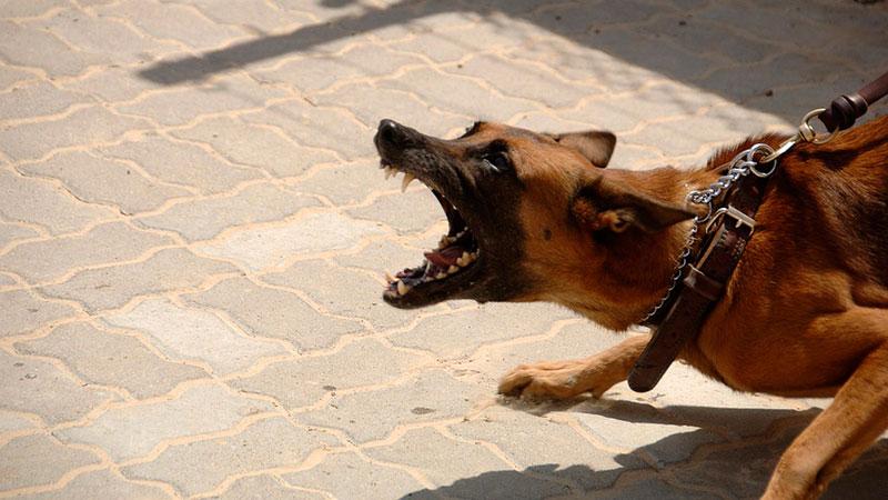 agresión de perros