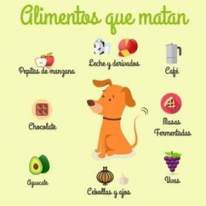 alimentos-evitar-perros