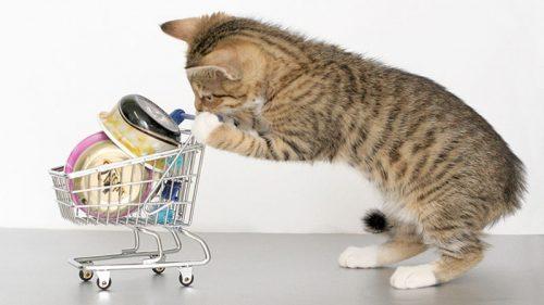 Alimentos para humanos que un gato no debería comer